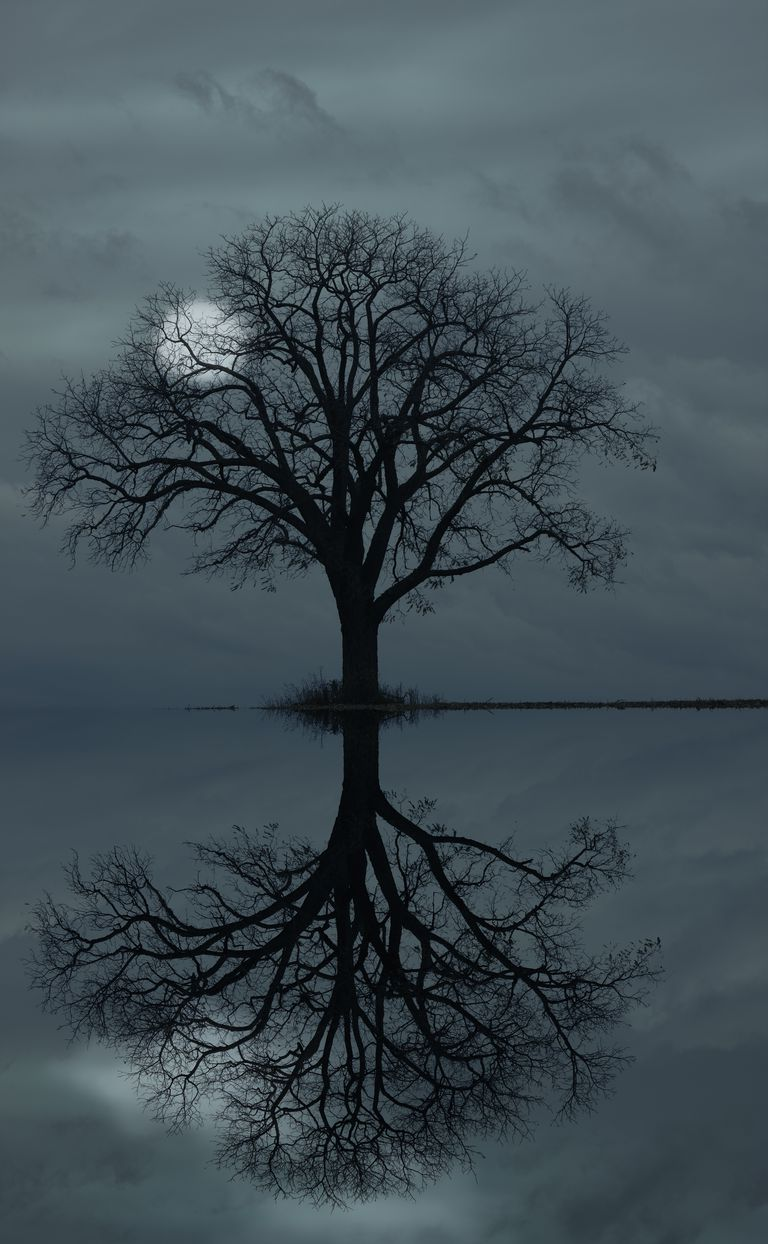 full moon behind tree silhouette