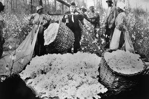1890s crop haul