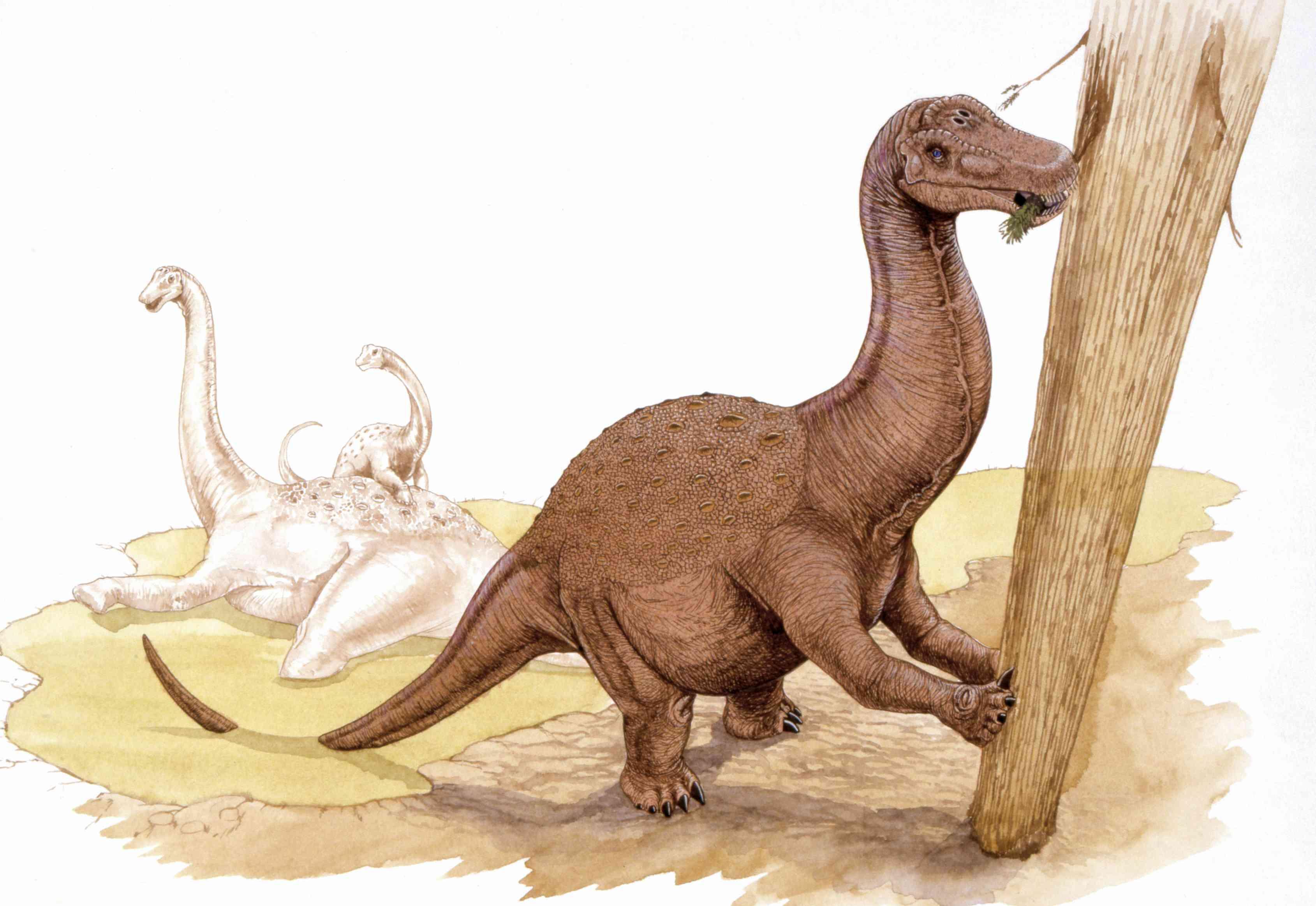 Illustration of Saltasaurus
