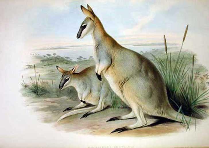 10 Recently Extinct Marsupials