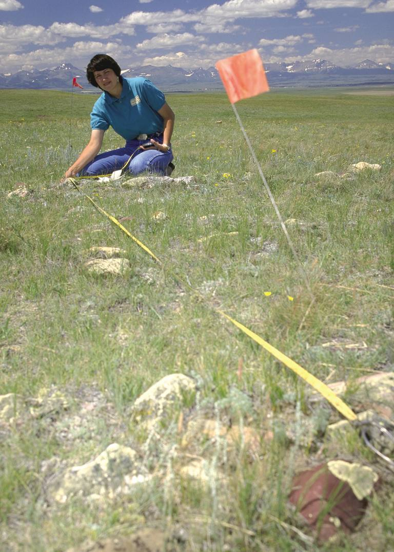 Measuring the Diameter of a Tipi Ring, Shelby, Montana