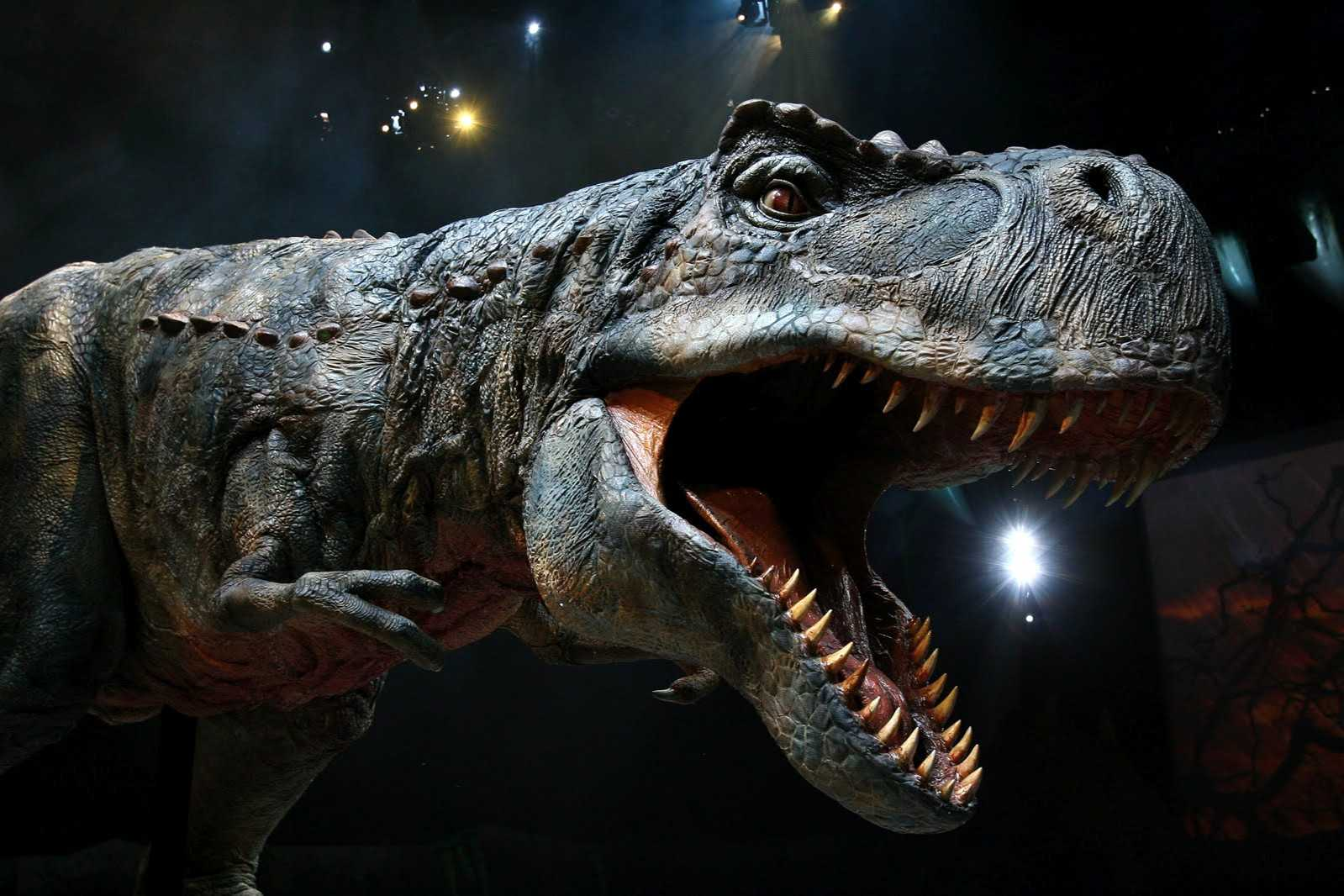 A model of gorgosaurus, who may instead be another example of albertosaurus