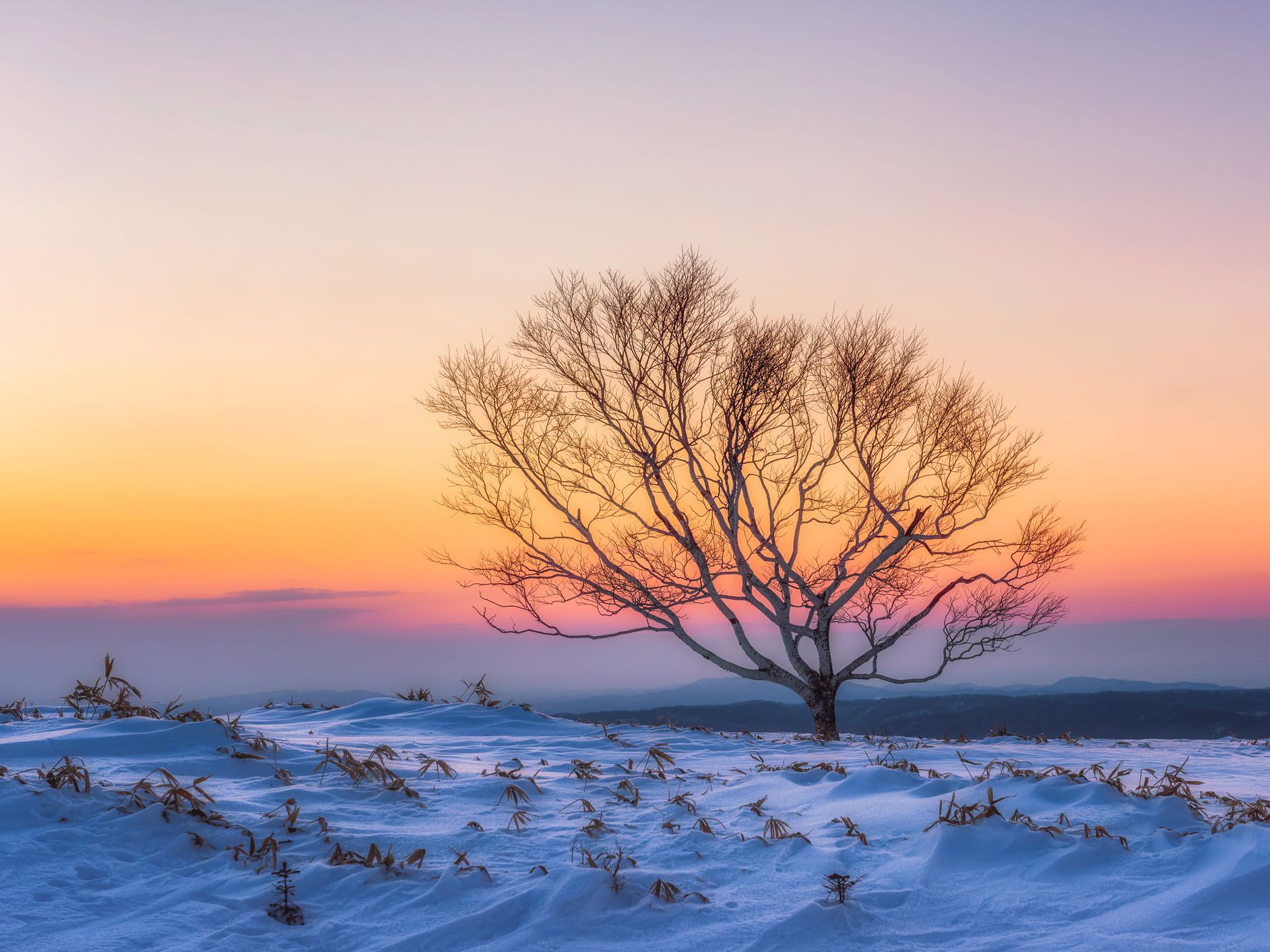 How To Winterize Your Dormant Trees