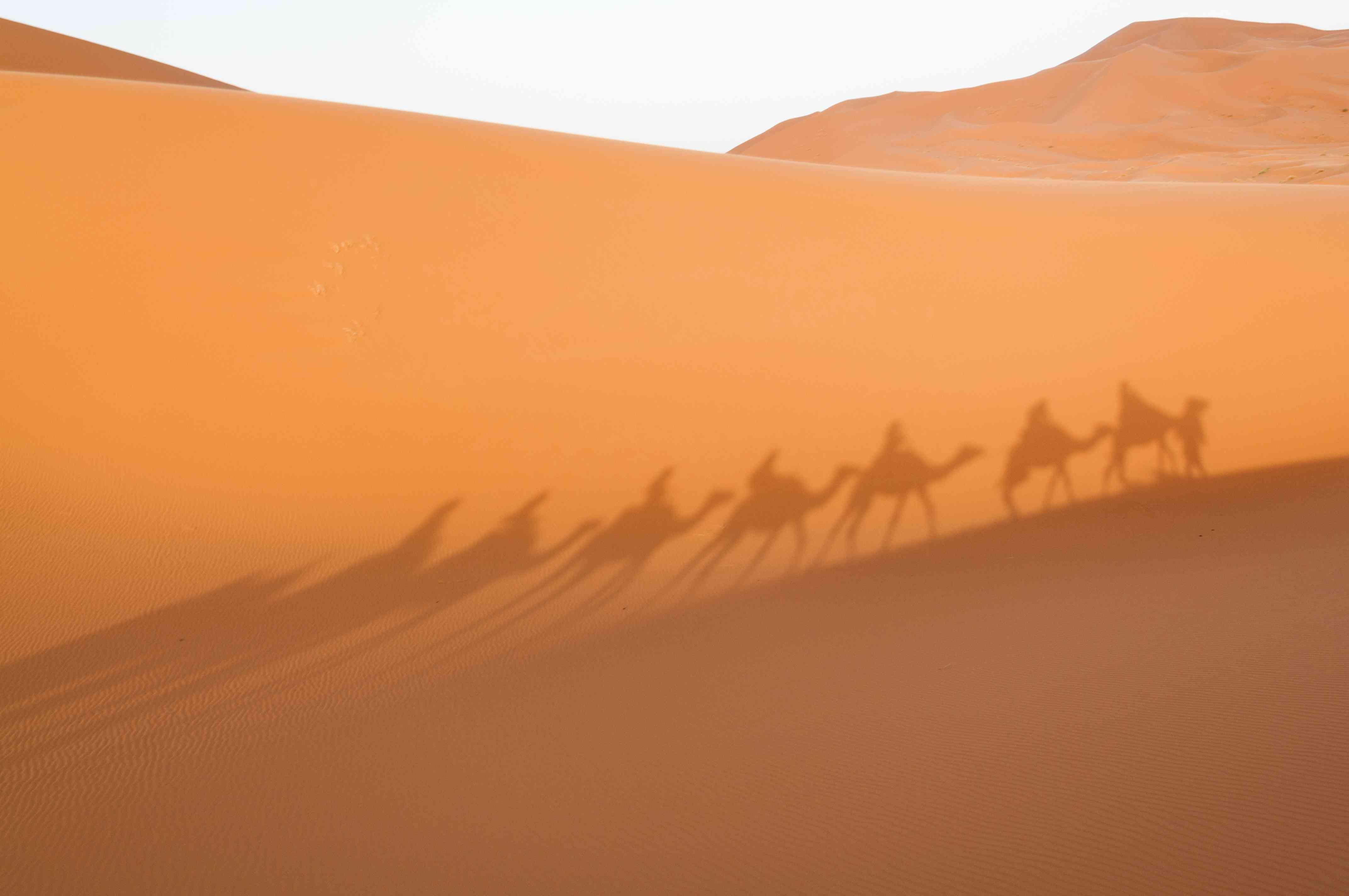 Shadows of a camel caravan across the Sahara Desert