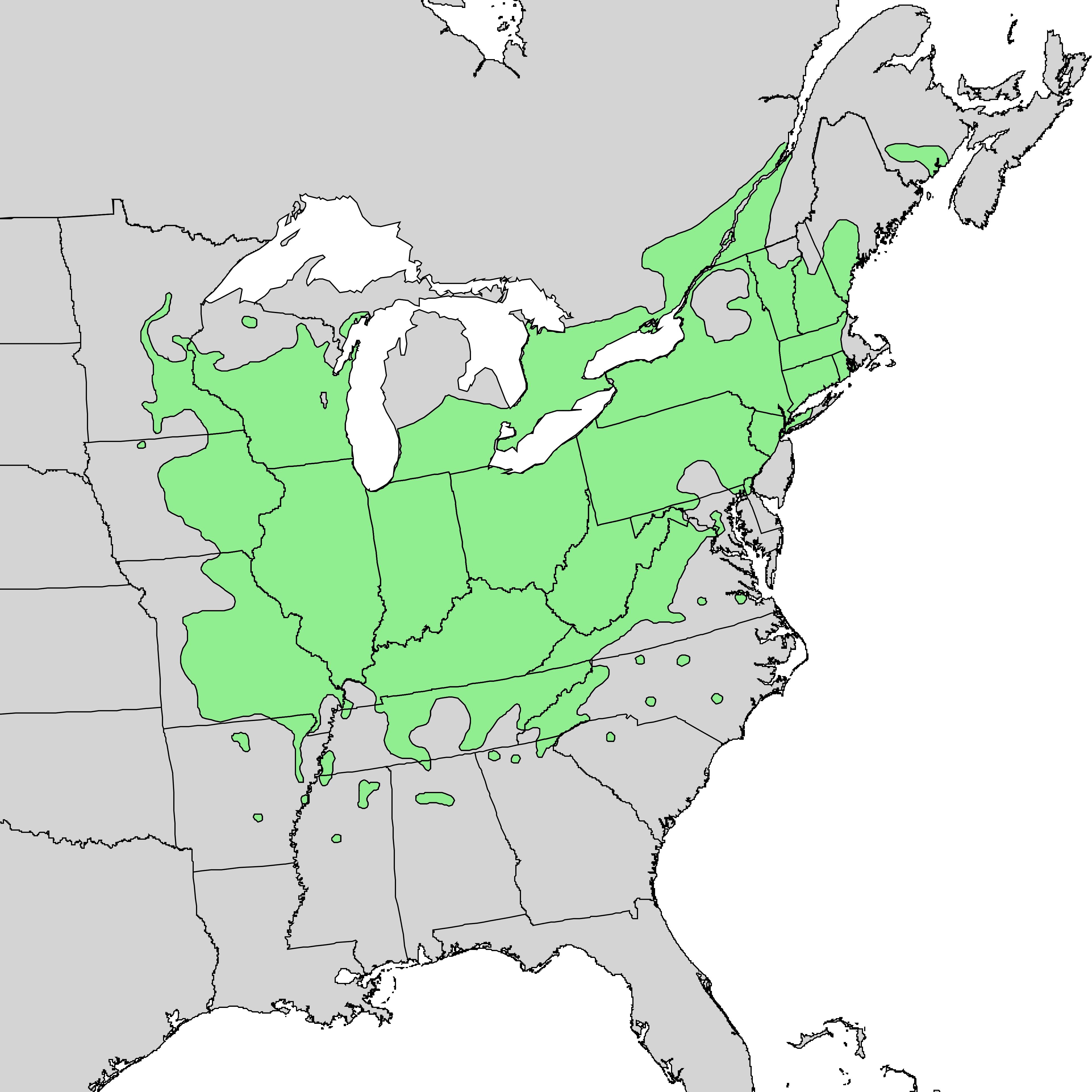 Butternut A Common Tree In North America