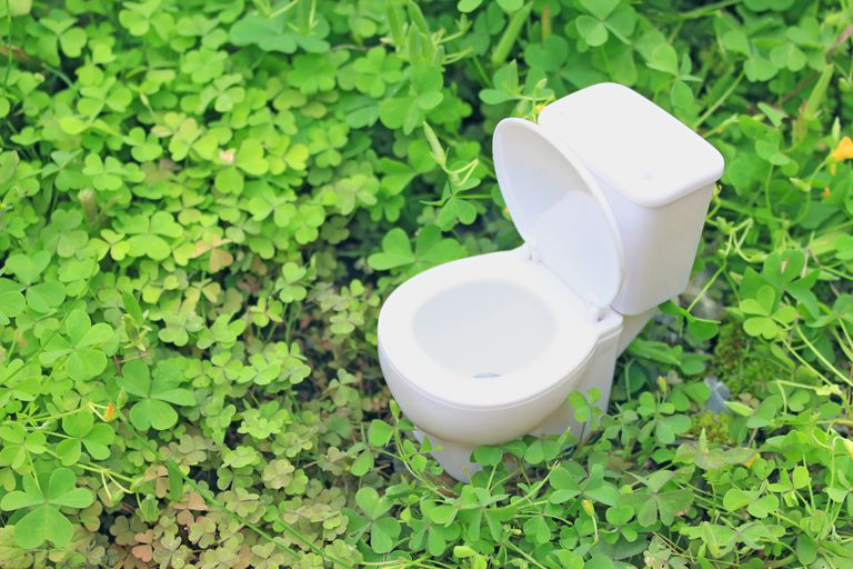 toilet in a patch of four leaf clovers