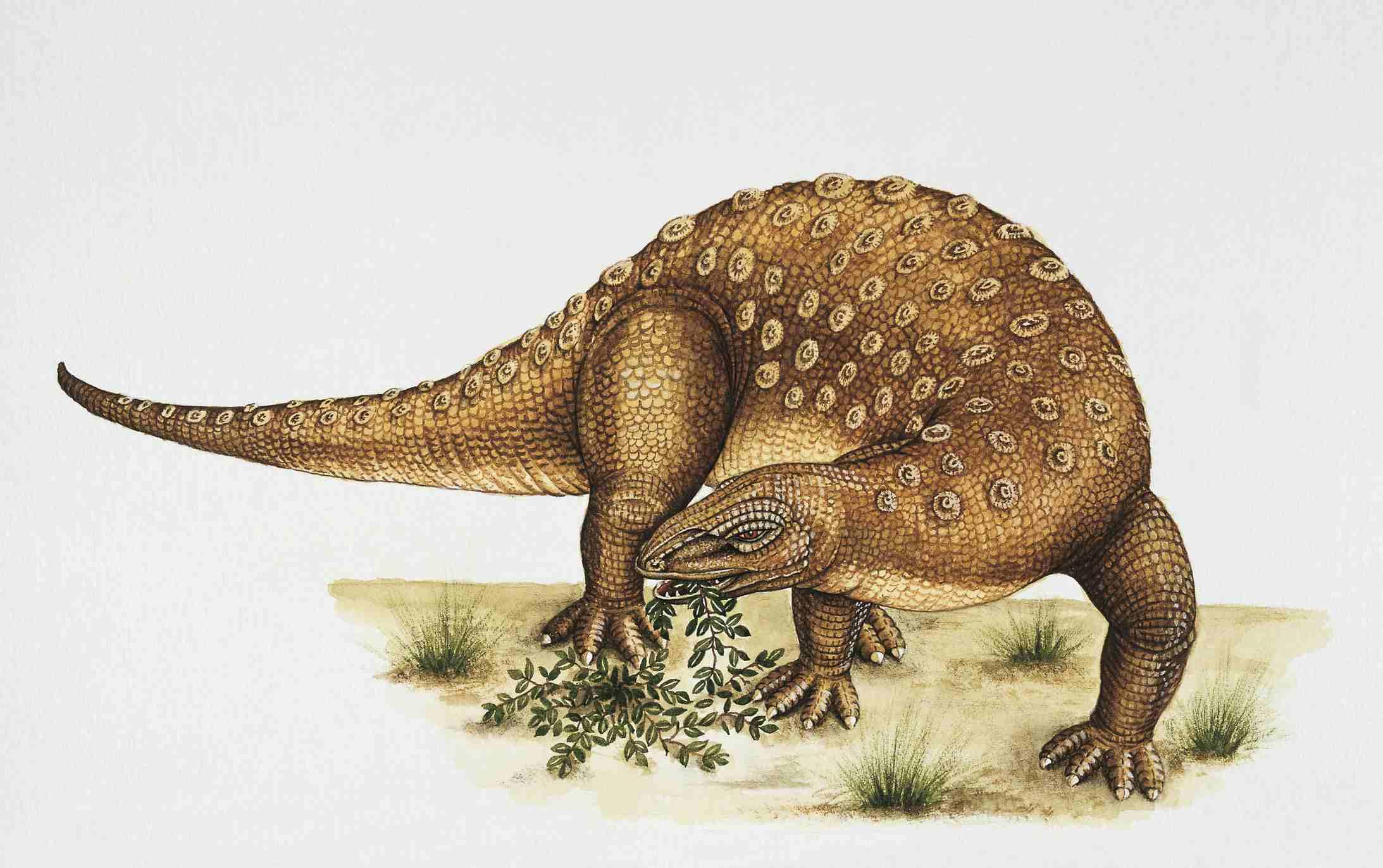 Minmi dinosaur eating grass