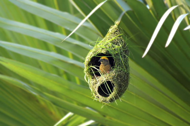 Types of bird nests weaver bird nest aloadofball Choice Image
