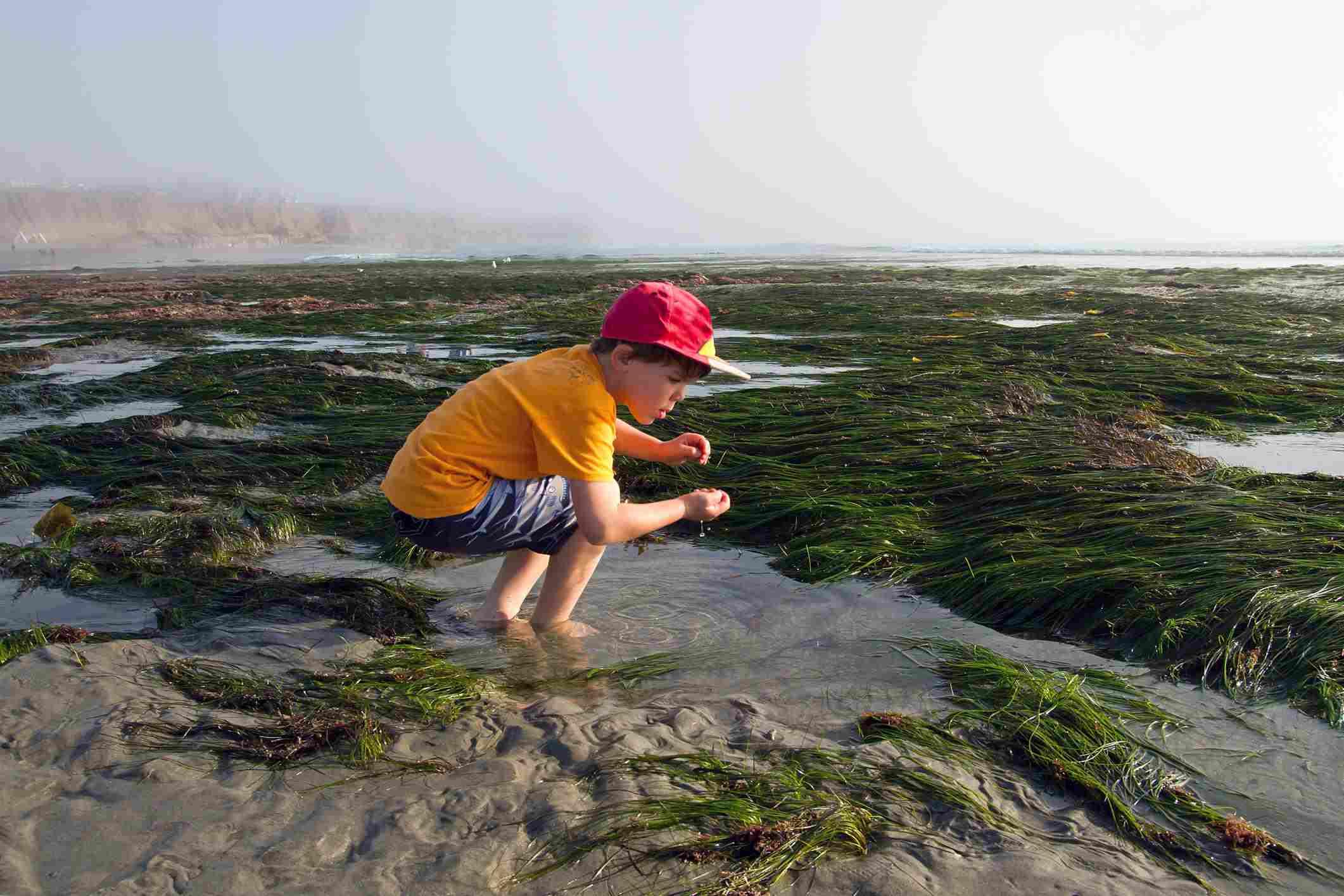 Boy in a Tide Pool at Low Tide