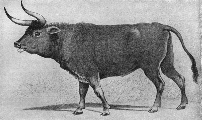 auroch prehistoric mammal facts and figures