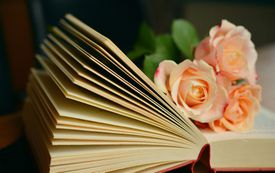 Rose laying on an open book.