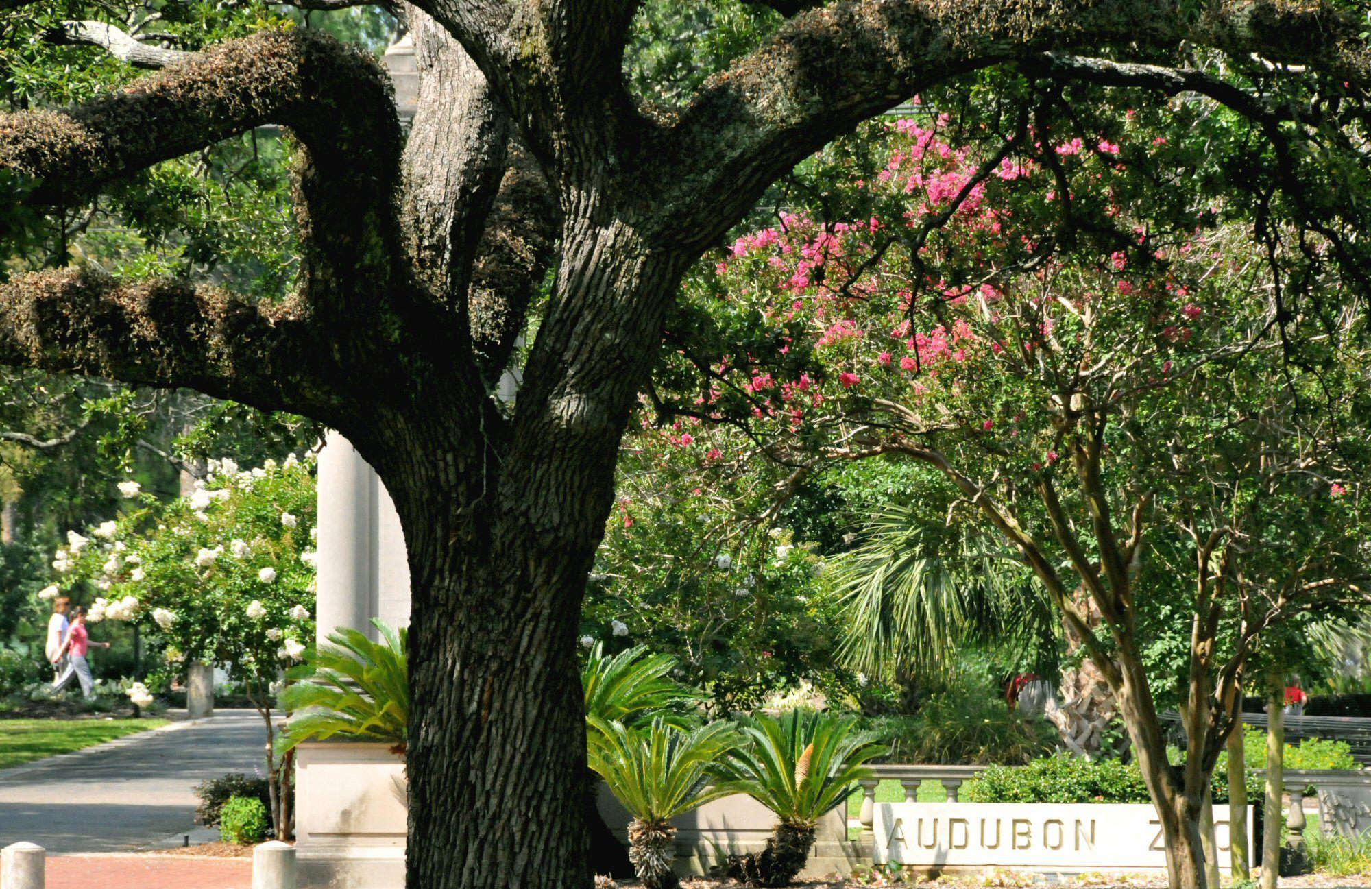 Φωτογραφία της περιοχής του ζωολογικού κήπου Audubon Park, σχεδιασμένη από τον Olmsted Brothers
