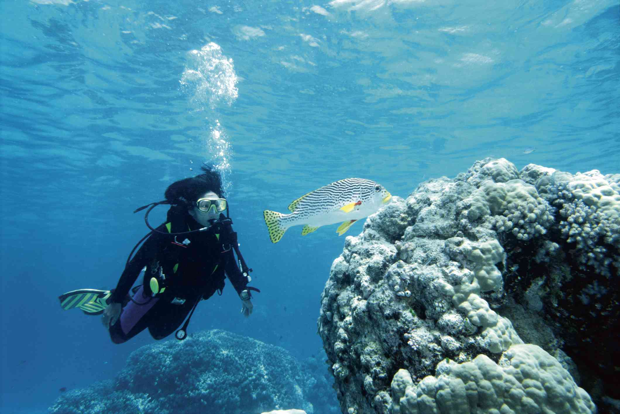 Scuba Diver and Sweetlips