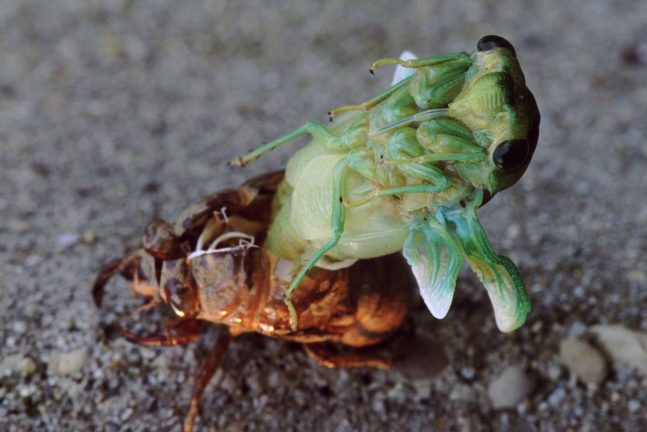 10 facts about arthropods