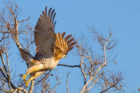Flight feathers include primaries, secondaries, tertials and many other specialized feathers.