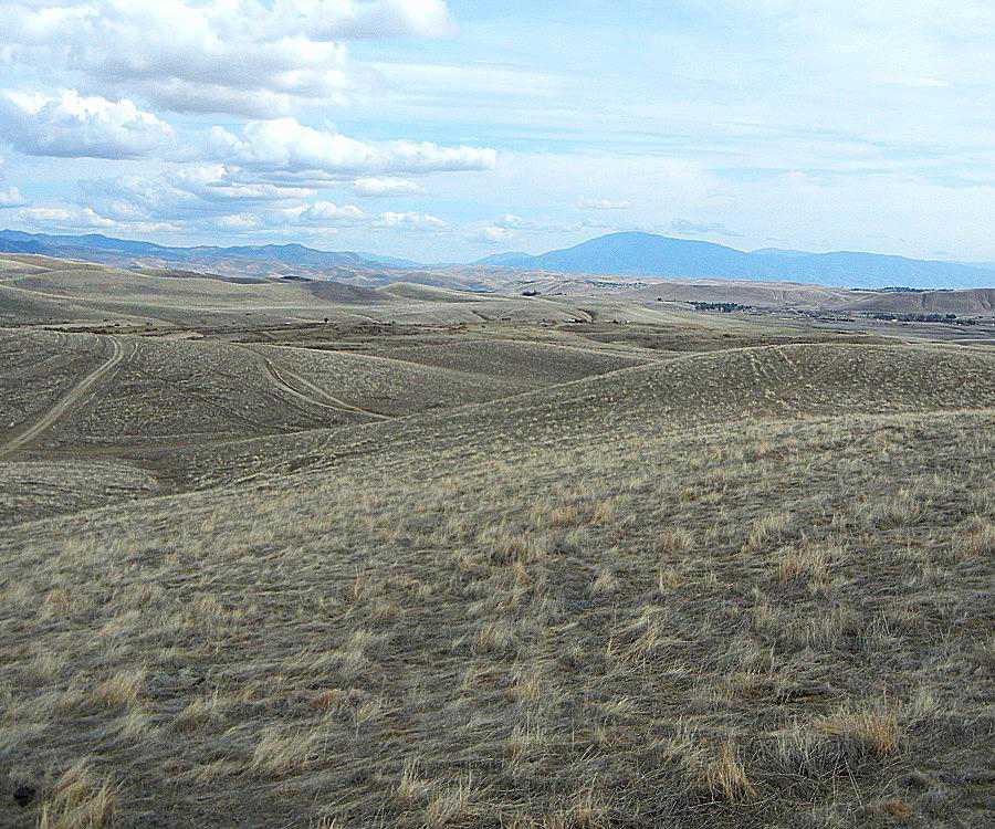 Central Valley rangeland
