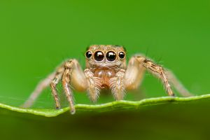 A small spider