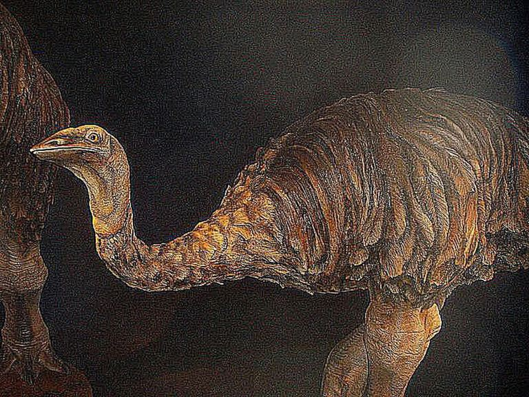 Illustration of Elephant bird.