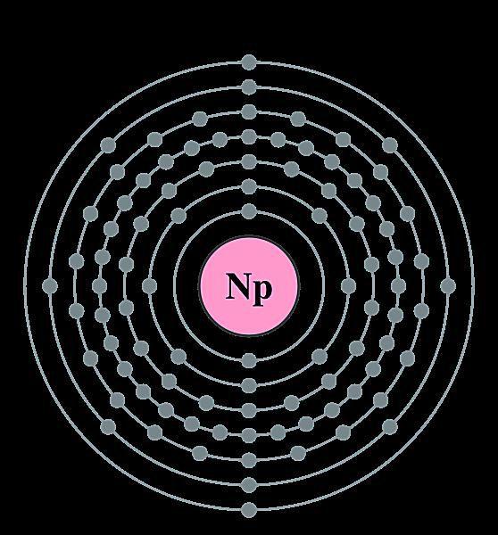 Electron shell diagram of neptunium.