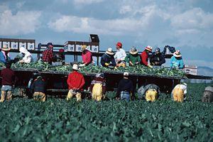 A día de hoy la agricultura de Estados Unidos no funcionaría sin los inmigrantes indocumentados.
