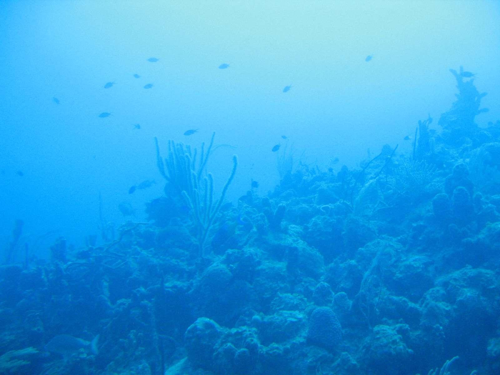 The ocean floor as seen underwater.