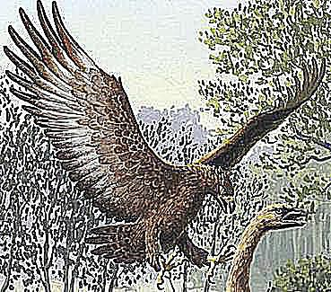 harpagornis giant eagle