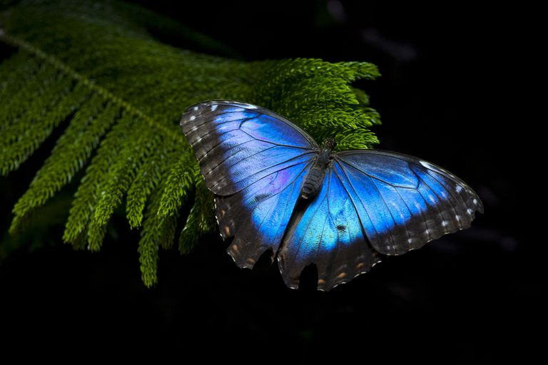 Butterfly Magic And Folklore