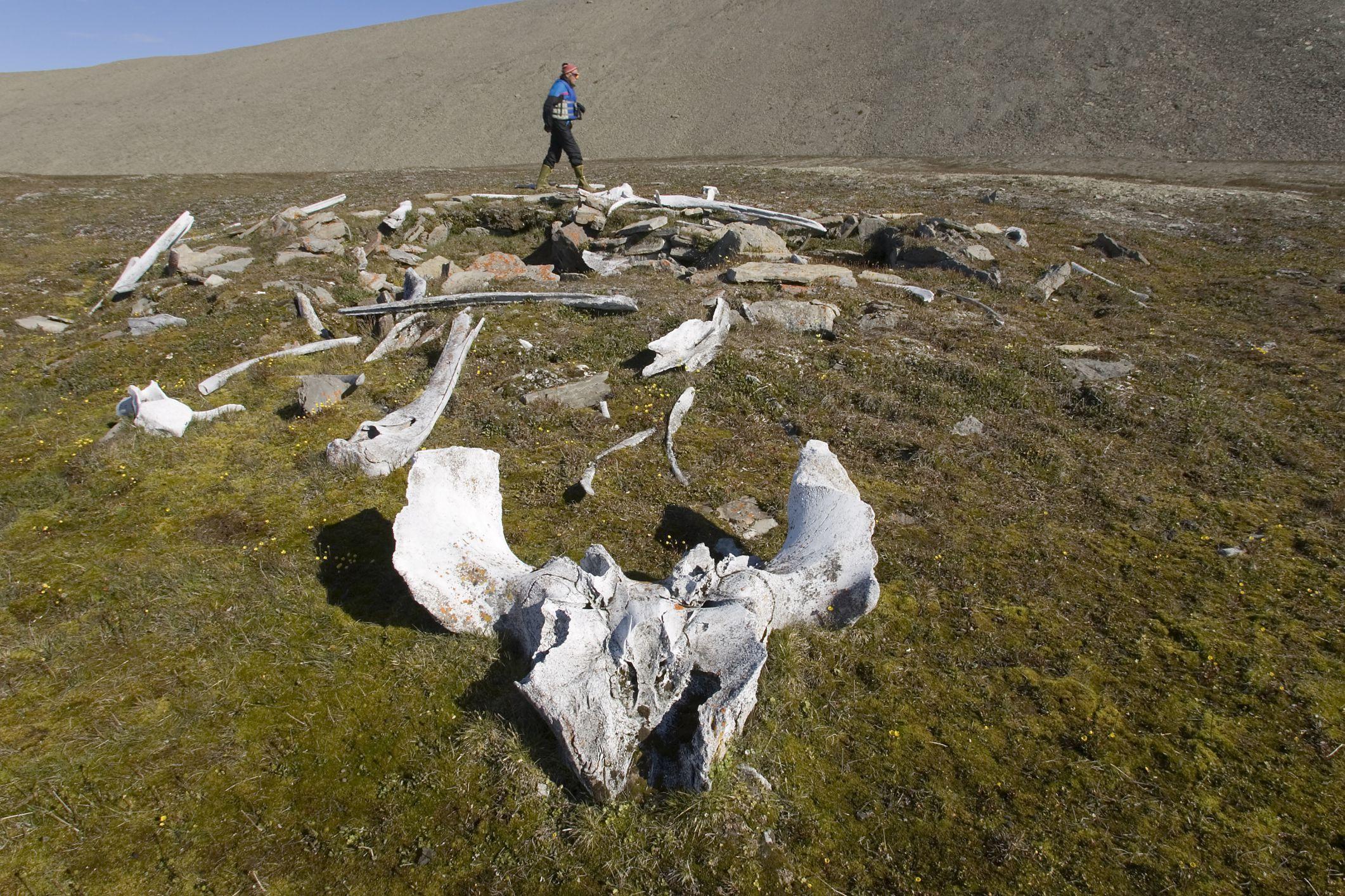 Inuit Semi-Υπόγειο Κατοικία με Bowhead Whale Bone στο Radstock Bay, Nunavut, Καναδάς