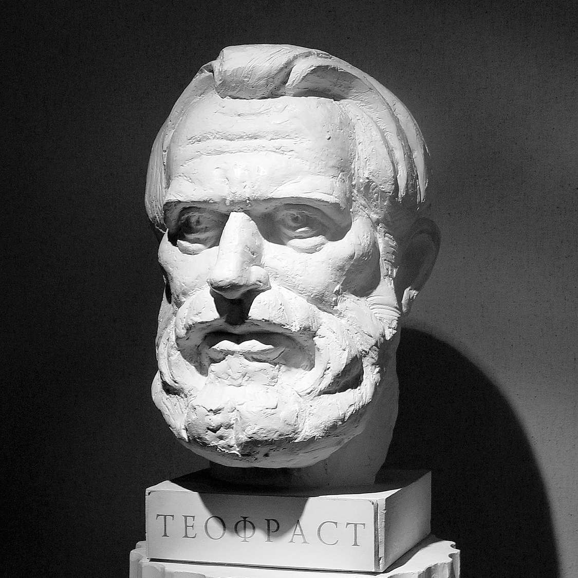 Theophrast's Bust