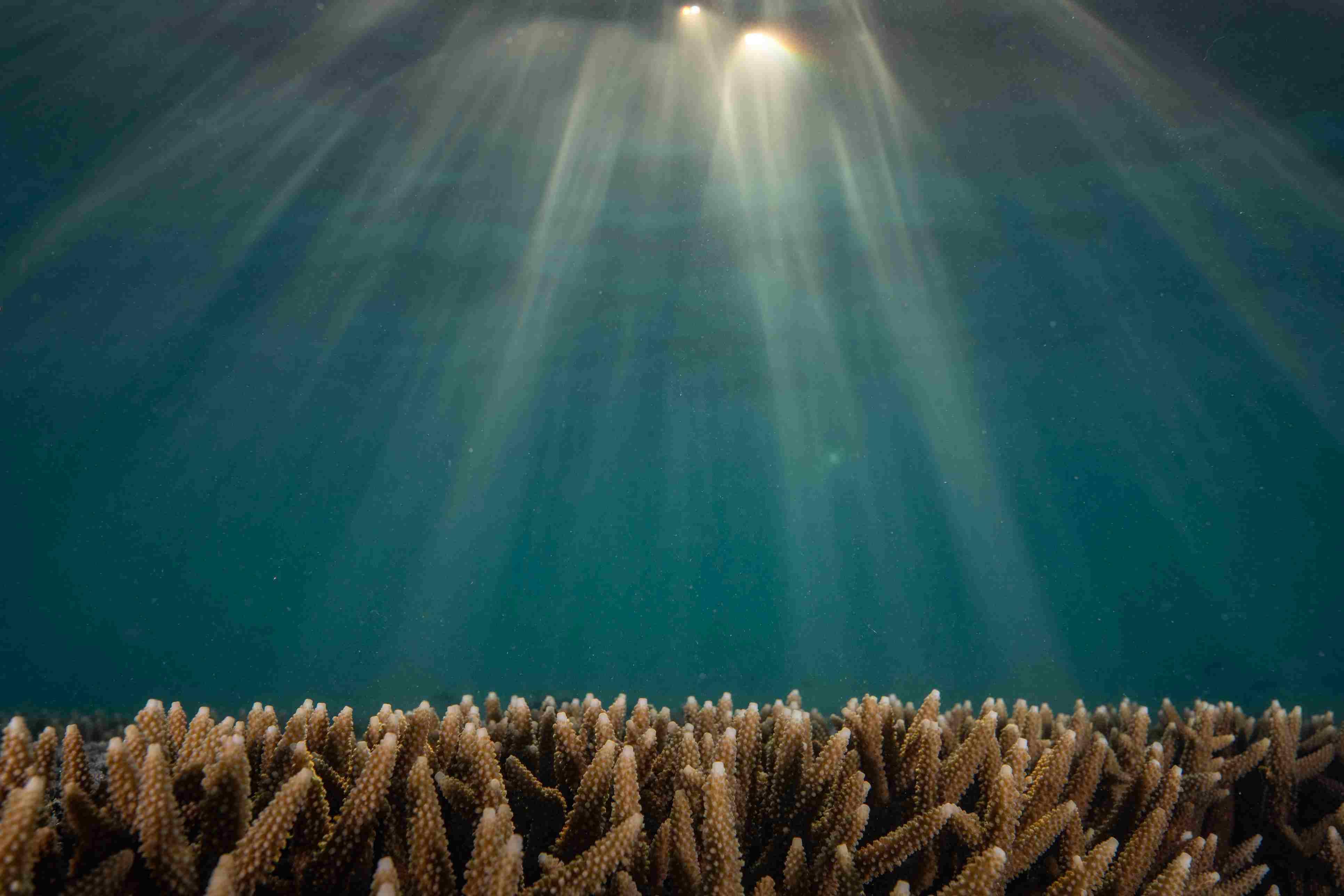 Heron Island Underwater Collection
