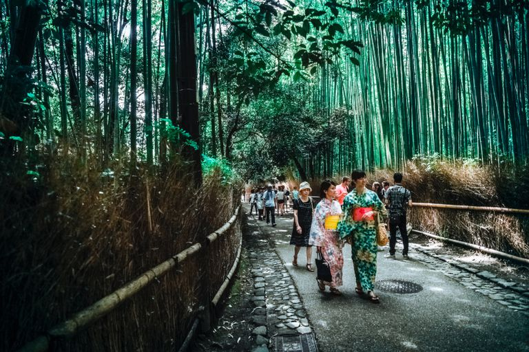 People walking on a paved walkway with bamboo on either side in Japan.