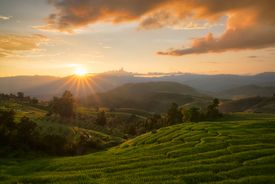 sunrise over rice fields in Thailand