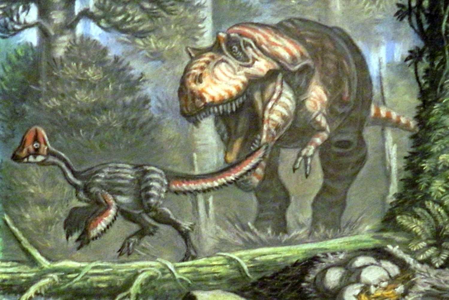 Albertosaurus hunting chirostenotes
