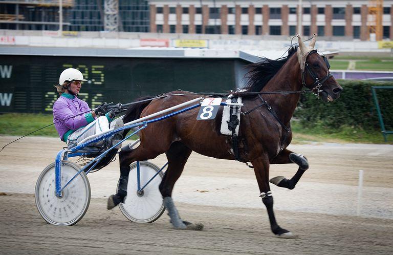 Trotting racer at the Krieau, Vienna, Austria