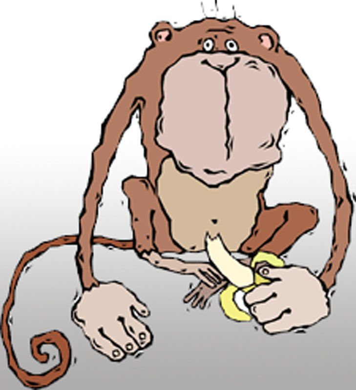 Funny Monkey Drawing Eating Banana
