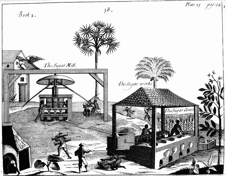 Early sugar farming and processing by slaves in the West Indies, 1753.