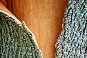 Tree Bark Split