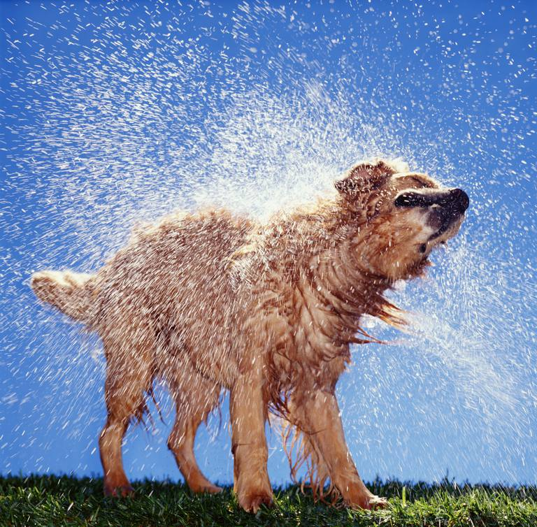 A dry dog also smells bad, you just can't detect the odor as well.