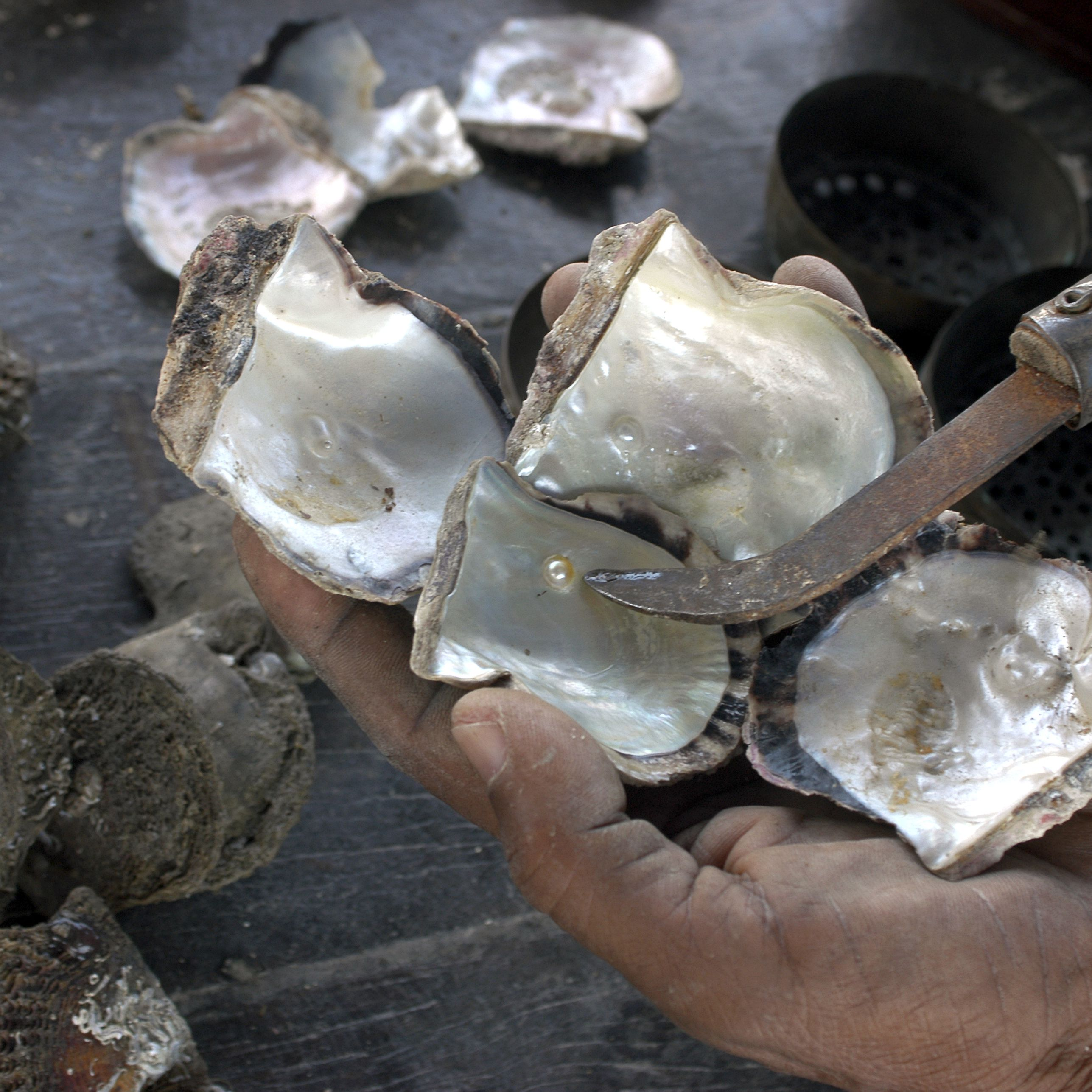 History of Pearl Diving in Qatar