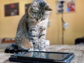 Cat watching video