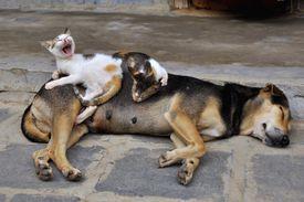 Chien et chats au Vietnam
