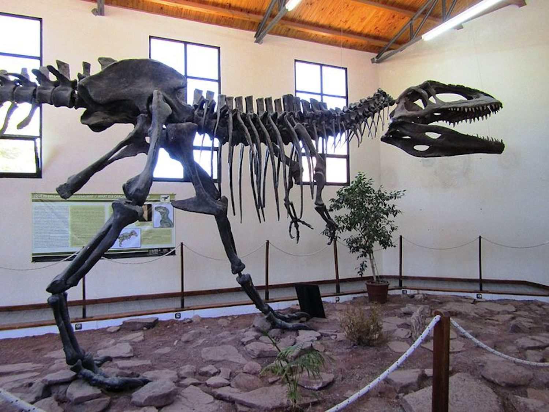 Reconstructed skeleton, EBPM
