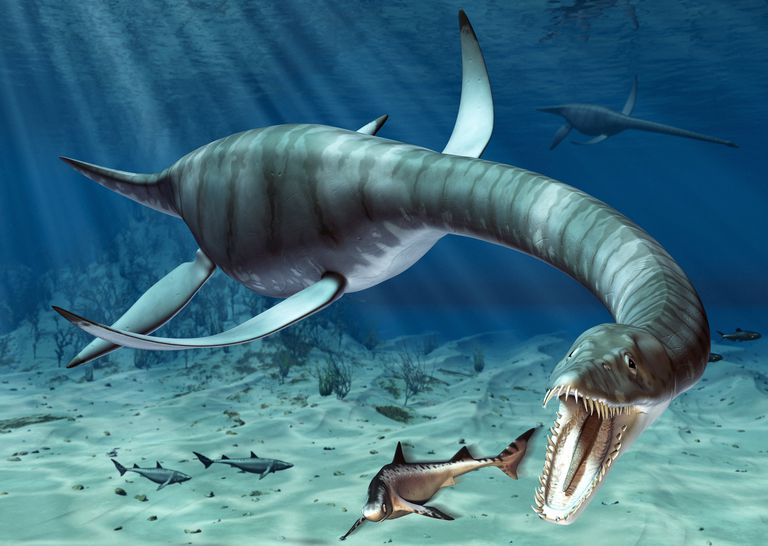 facts and figures about plesiosaurus the long necked marine reptile