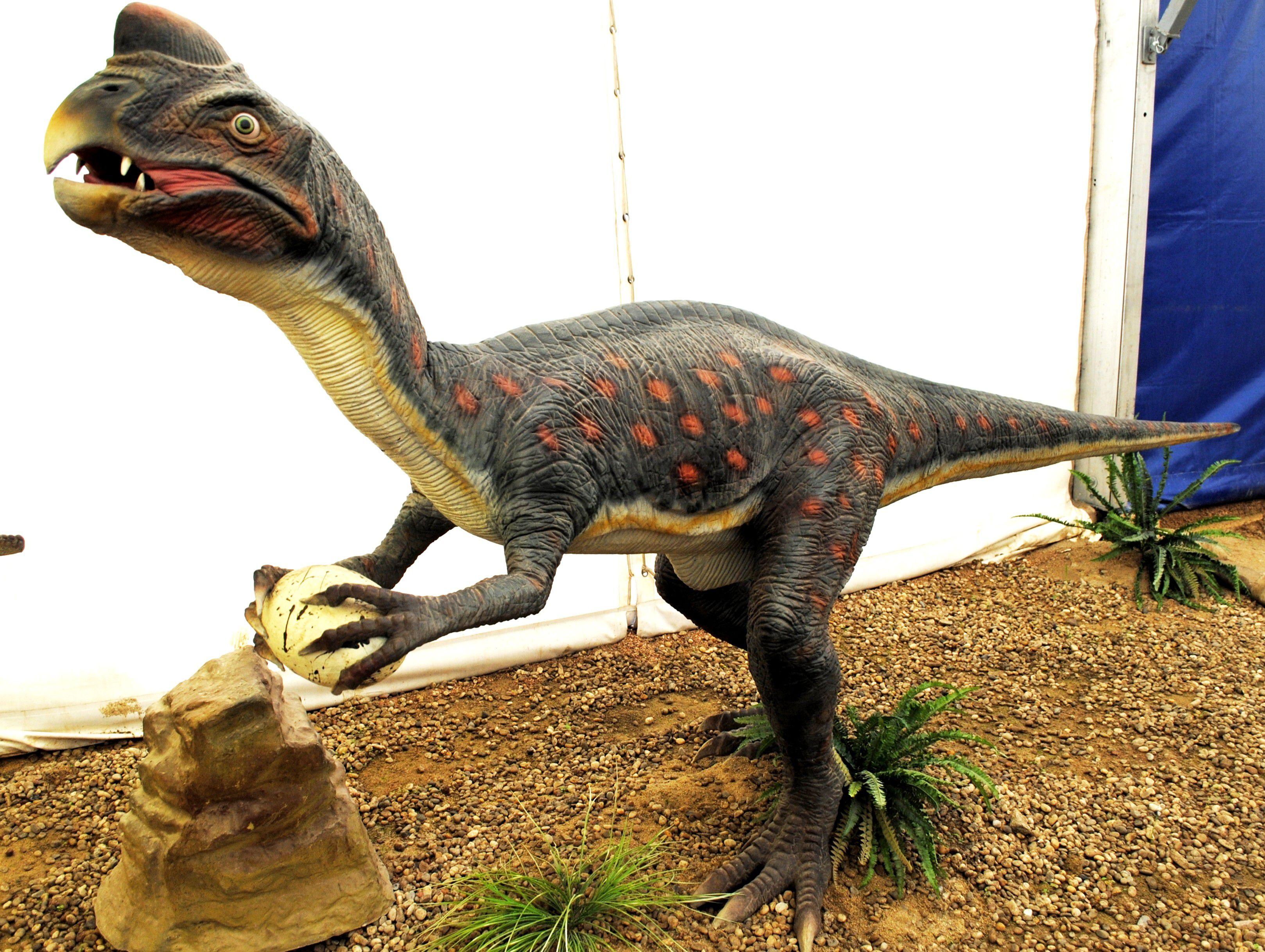 Una vez etiquetado como el ladrón de huevos, oviraptor, que se muestra aquí con un huevo, ha sido absuelto de todos los cargos.