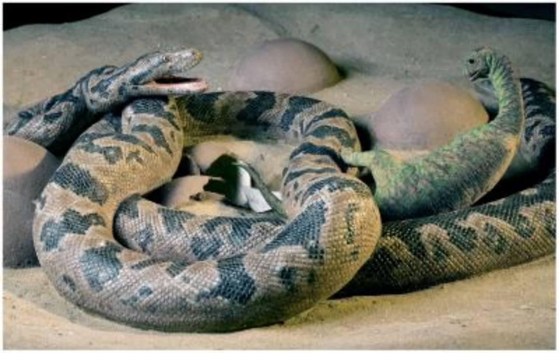 Dinosaur-Eating Snake
