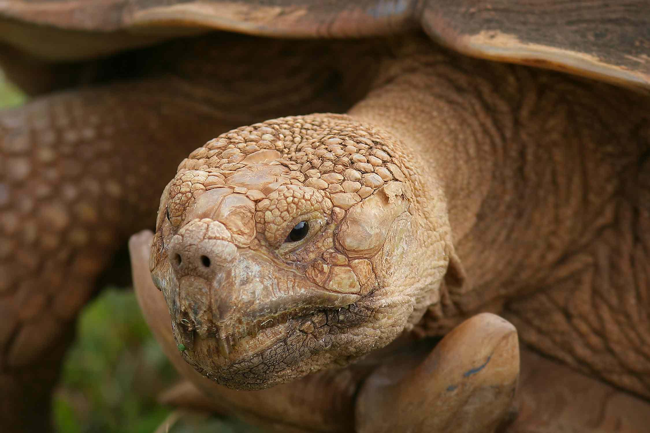 Turtles - Testudines