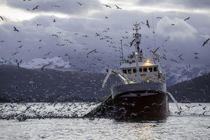 Fishing for herring