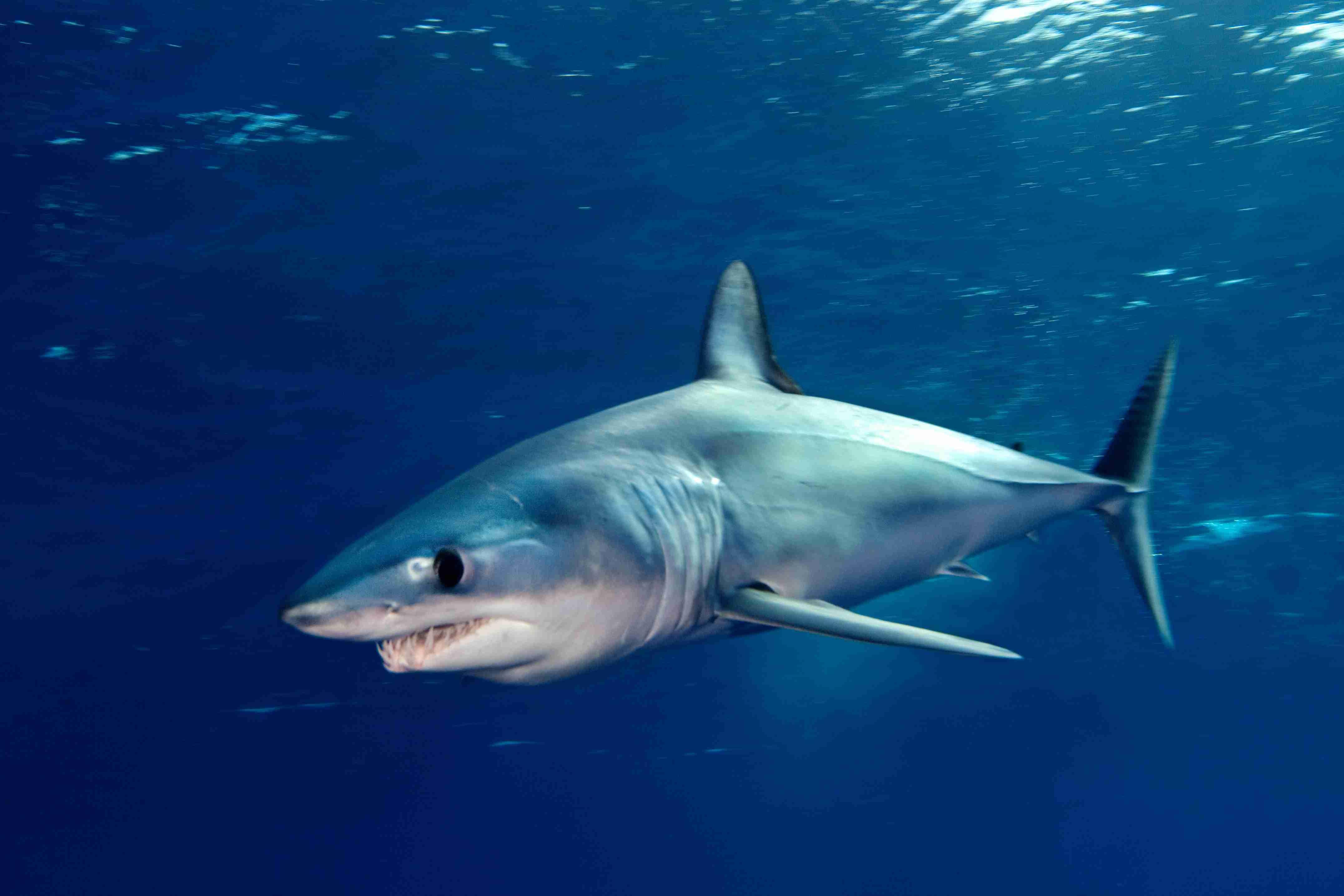 все картинки с акулами достаточно