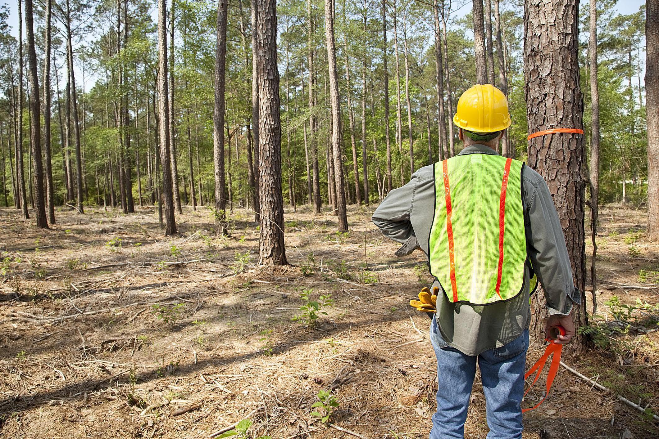 Картинка работников леса