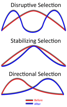 Three types of natural selection